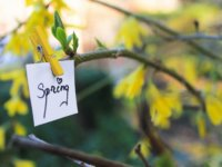 Tavaszra várva